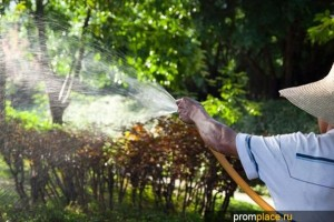 Воздействие фунгицидов на растения: особенности применения препаратов