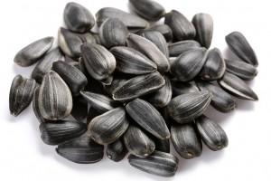 Семена гибридов подсолнуха от мировых брендов