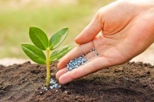 Применение минеральных удобрений для оптимальной подкормки культурных растений