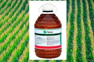 Советы по применению гербицида Прима в посевах кукурузы и зерновых культур