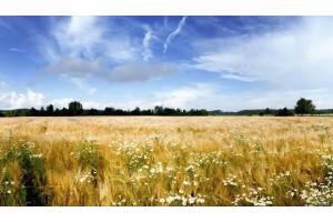 Перспективы аграрного бизнеса в Украине